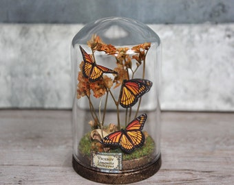 Butterflies in a Glass Dome Display - Faux Taxidermy Miniature -Natural History Gift - Biology and Science - 2.75 x 1.73 inches / 7 x 4,4 cm