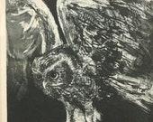 """Vintage 1960s Jack Coughlin """"Owl in Flight"""" Print"""