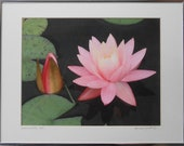 Framed Water Lily Print / Vintage Water Lily Print / Water Lily