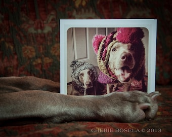 It's Cold Outside - Blank Weimaraner Greeting Card