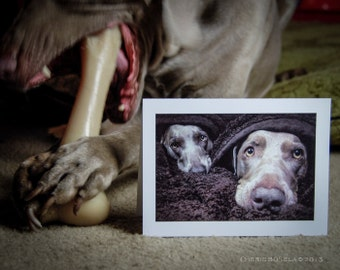 Weimaraner Cold and Cozy Greeting Card - Blank