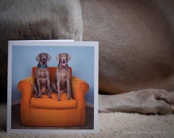 Weimaraner Big Orange Chair Greeting Card - Blank