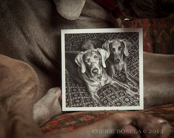 Blank Weim Greeting Card - Black and White Photography