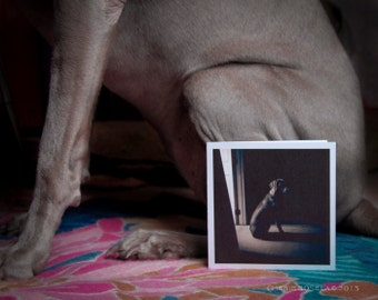 Weimaraner Ready for Bed Greeting Card - Blank