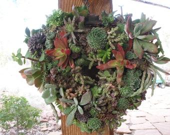 Heart-Shaped Living Wreath