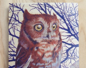 Eastern Screech Owl : Hand-Embellished Print on Wood