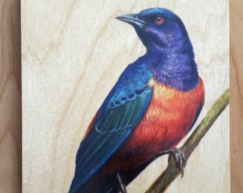 Hildebrandt's Starling : Hand-Embellished Print on Wood