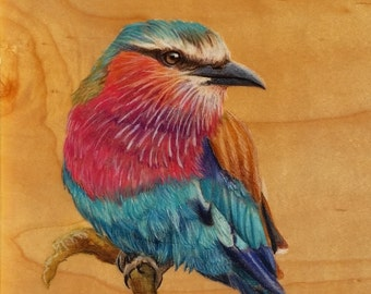 Lilac - Breasted Roller : Original Artwork Drawing on Wood