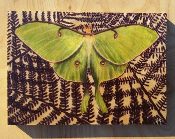 Luna Moth : Hand-Embellished Print on Wood