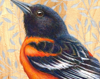 Baltimore Oriole: Original Artwork Drawing on Wood