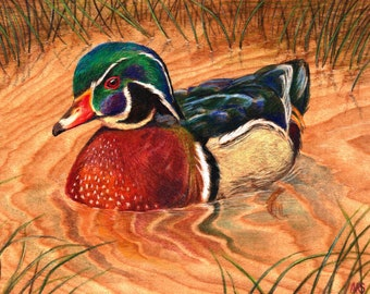 Wood Duck : Original Artwork Drawing on Wood