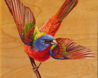 Painted Bunting: Original Artwork Drawing on Wood