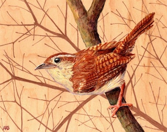Carolina Wren : Original Artwork Drawing on Wood