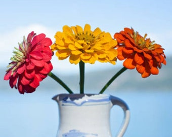 Heirloom Zinnia Lilliput Mix Organic Flower Seed Container Friendly Annual Cut Flower Garden Container Friendly