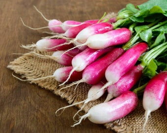 Heirloom French Breakfast Radish Seeds Vegetable Garden Organic Seed Non Gmo Container Gardening