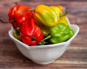 Heirloom Habanero Pepper Seeds Vegetable Garden Organic Seed Non Gmo Container Gardening Hot Chilli Pepper