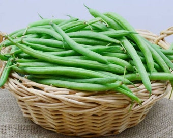 Heirloom Kentucky Wonder Bush Bean Vegetable Organic Seed Garden Non Gmo KY