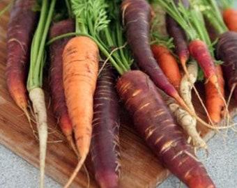 Heirloom Rainbow Blend Carrot Seeds Vegetable Garden Organic Seed Non Gmo