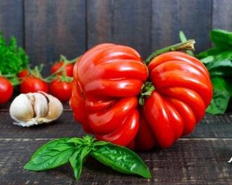 Heirloom Costoluto Genovese Tomato Vegetable Seed Garden Organic Non Gmo Italian