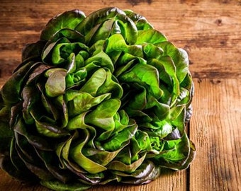 Heirloom Bronze Mignonette Butterhead Lettuce Seeds Vegetable Garden Organic Non Gmo Container Friendly