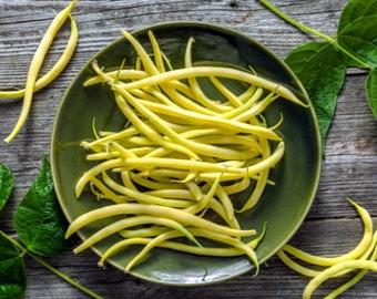 Heirloom Gold Rush Bush Bean Seeds Vegetable Garden Organic Seed Non Gmo Container Friendly Yellow Wax