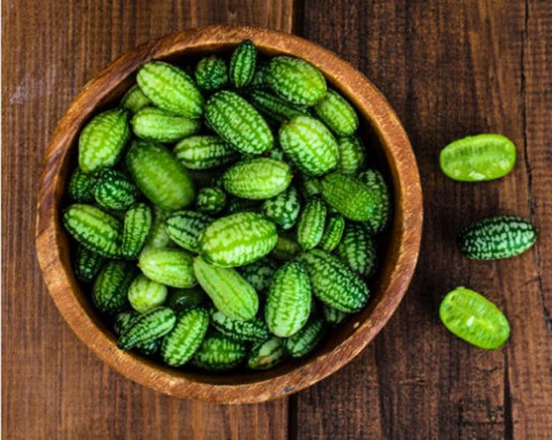 Heirloom Cucamelon Sour Gherkin Cucumber Seeds Vegetable image 0