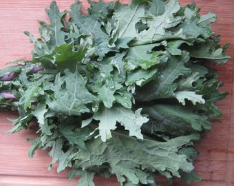 Heirloom Red Russian Kale Seeds Vegetable Garden Organic Seed Non Gmo Container Friendly