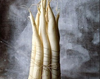 Organic Salsify Mammoth Sandwich Island Heirloom Vegetable Seeds