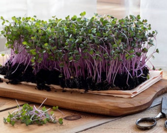 Microgreen Mix Organic Seeds Micro Greens Heirloom Non Gmo Blend Sprouts Container Gardening
