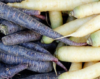 Heirloom Carrot Monochrome Mix Seeds Vegetable Garden Organic Seed Non Gmo