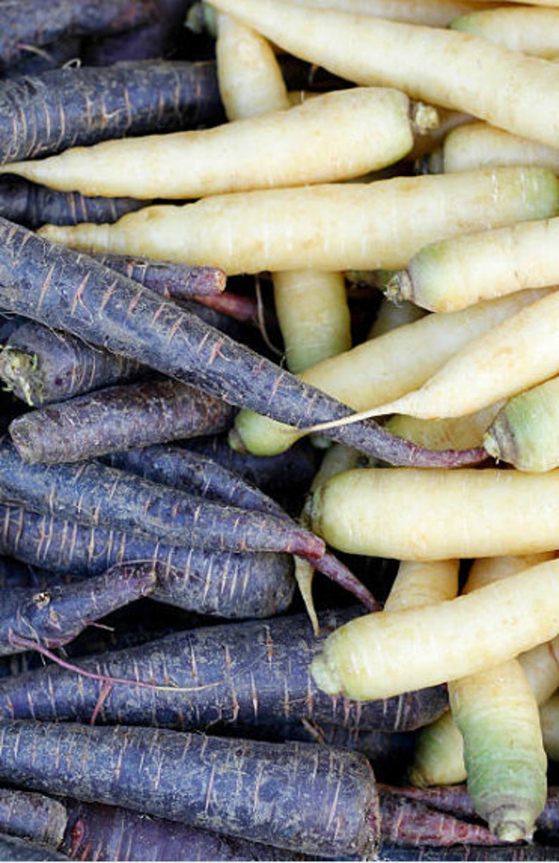 Heirloom Carrot Monochrome Mix Seeds Vegetable Garden Organic image 0