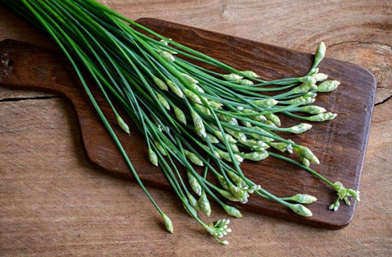Heirloom Garlic Chives Herb Seeds Garden Organic Non Gmo image 0