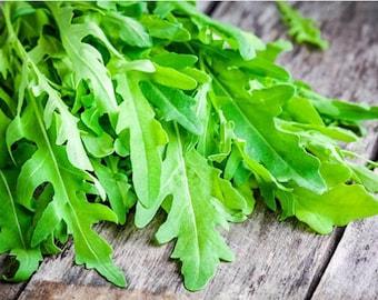 Heirloom Rocket Arugula Seeds Vegetable Garden Organic Seed Non Gmo Container Friendly Salad Lettuce Herb