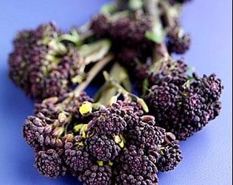 Heirloom Purple Broccoli Vegetable Seed Garden Organic Non Gmo Early Purple Sprouting