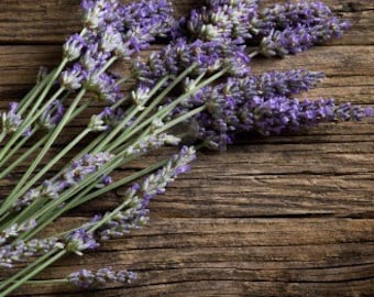 Heirloom Vera English Lavender Organic Herb Flower Seed