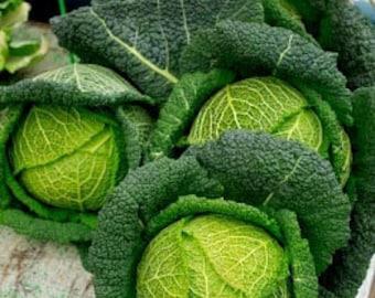 Heirloom Savoy Cabbage Organic Vegetable Garden Seeds Non Gmo Perfection Savoy