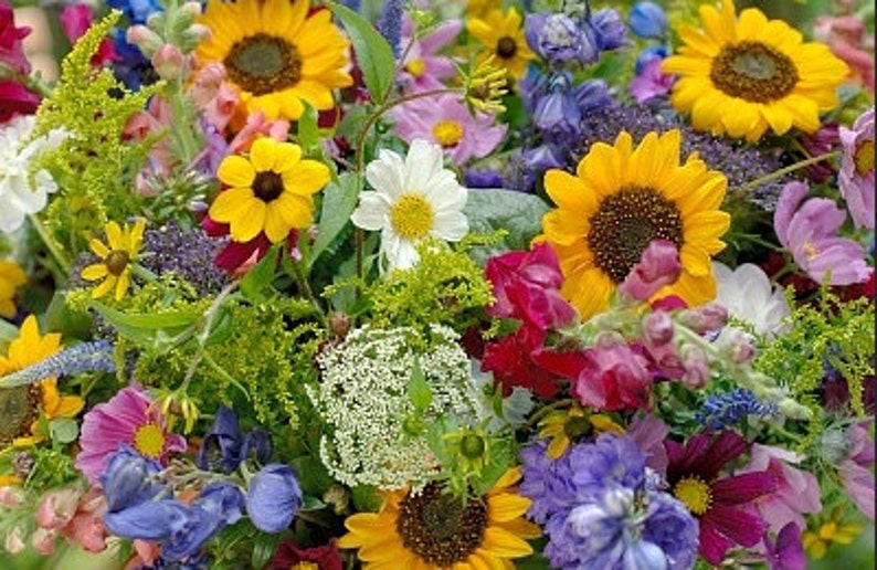 Heirloom Cut Flower Mix Wildflower Seeds Organic Garden image 0