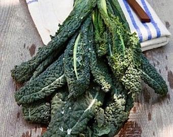 Heirloom Dinosaur Kale Seed Organic Vegetable Garden Non Gmo Italian Lacinato Nero Toscana