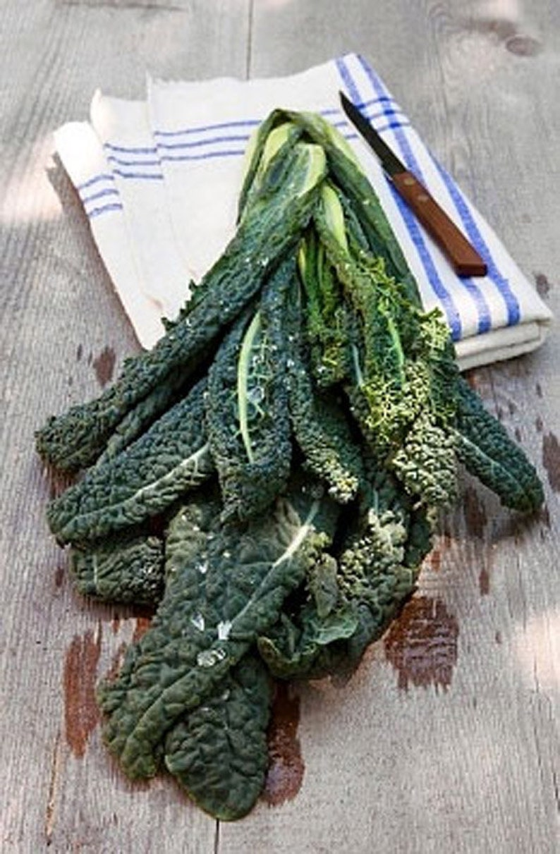 Heirloom Dinosaur Kale Vegetable Seed Garden Organic Non Gmo image 0
