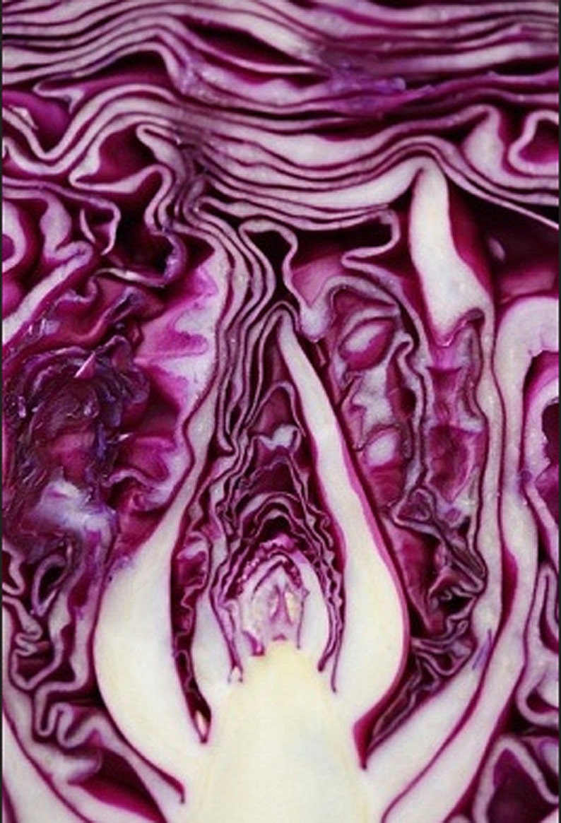 Organic Red Cabbage Heirloom Seed Non Gmo Vegetable Garden Red image 0