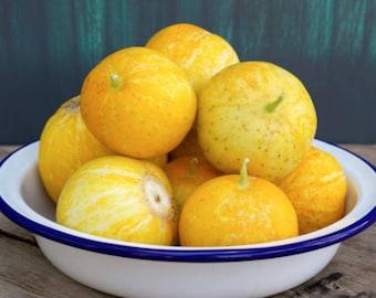 Heirloom Lemon Cucumber Seeds Vegetable Garden Organic Seed Non Gmo
