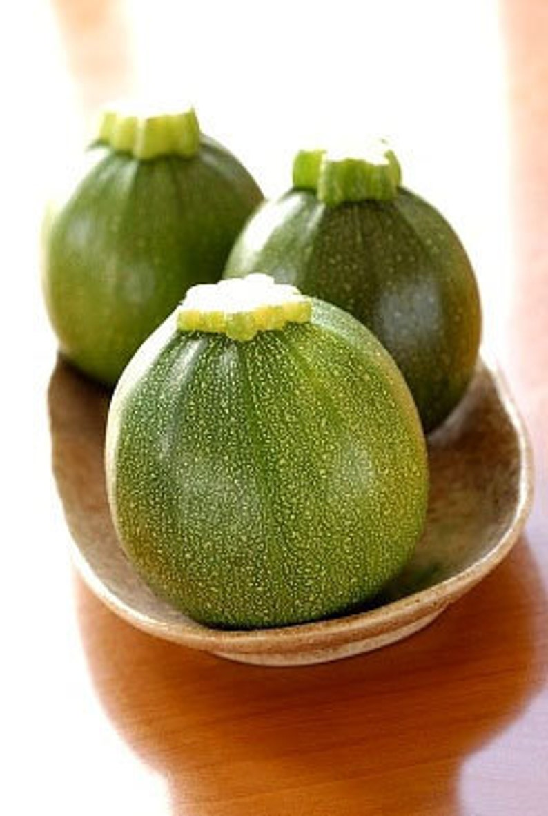 Heirloom Round Zucchini Squash Seeds Vegetable Garden Organic image 0
