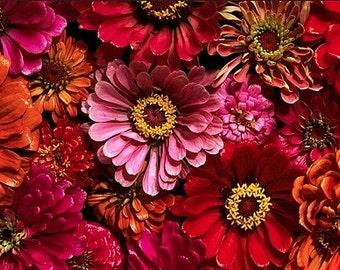 Heirloom Zinnia California Giants Mix Flower Seed Garden Organic Non Gmo Annual or Wildflower