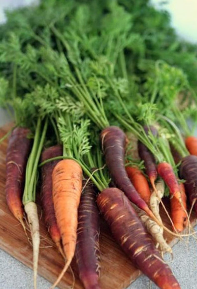 Heirloom Rainbow Blend Carrot Seeds Vegetable Garden Organic image 0