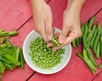 Heirloom Lincoln Shelling Peas Vegetable Seed Garden Organic Non Gmo