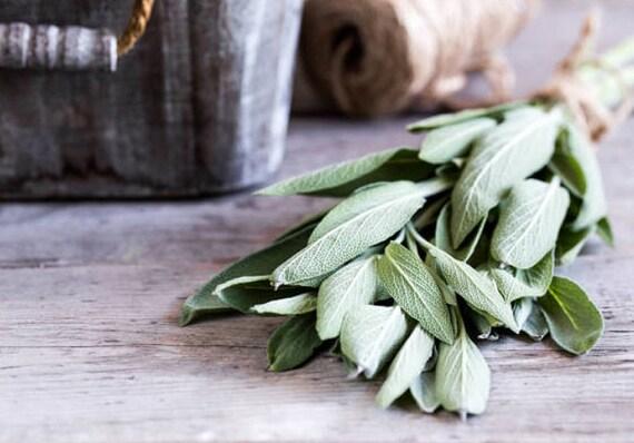 Medical Sage 100 seeds non GMO