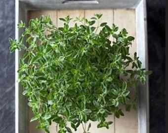 Heirloom Sweet Marjoram Herb Seed Garden Organic Non Gmo Container Friendly