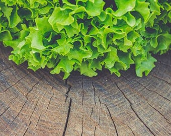 Heirloom Salad Bowl Lettuce Seeds Vegetable Garden Organic Seed Non Gmo Container Friendly Microgreens