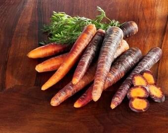 Heirloom Cosmic Purple Carrot Vegetable Seed Garden Organic Non Gmo