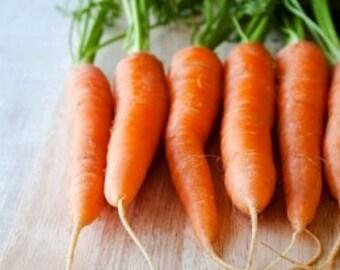 Heirloom Danvers Carrot Vegetable Seed Garden Organic Non Gmo